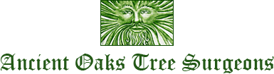 Ancient Oaks Tree Surgeons