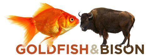 Goldfish&Bison