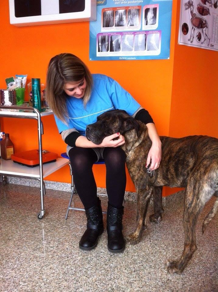 Centro Veterinario 2000 - Veterinaria mentre accoglie un cane
