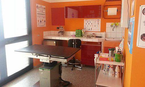 nterno del Centro Veterinario 2000 a Putignano Bari