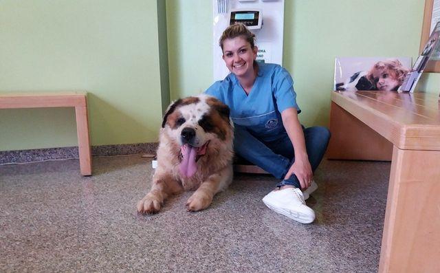 Centro Veterinario 2000 - veterinaria con cane