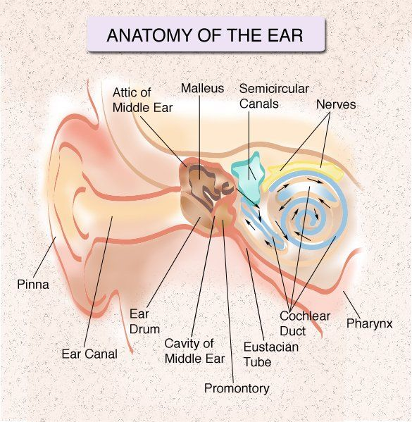 Congenital Ear Pit – Daily Motivational Quotes
