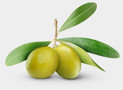 Olive raccolte con macchine agricole ad Angri