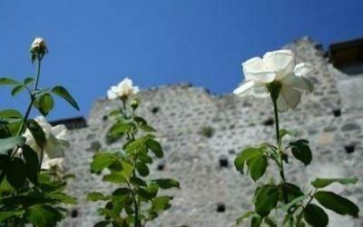 delle rose bianche e una muraglia