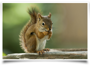 squirrel removal San Antonio, TX