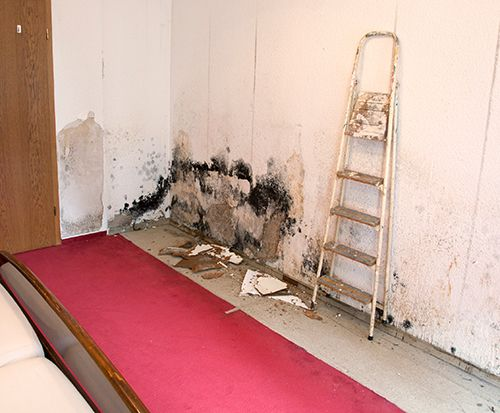 Houston Mold Removal -