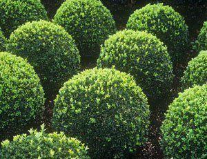 plants in shape