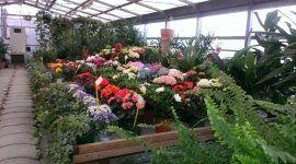 fiori, fiori freschi, piante