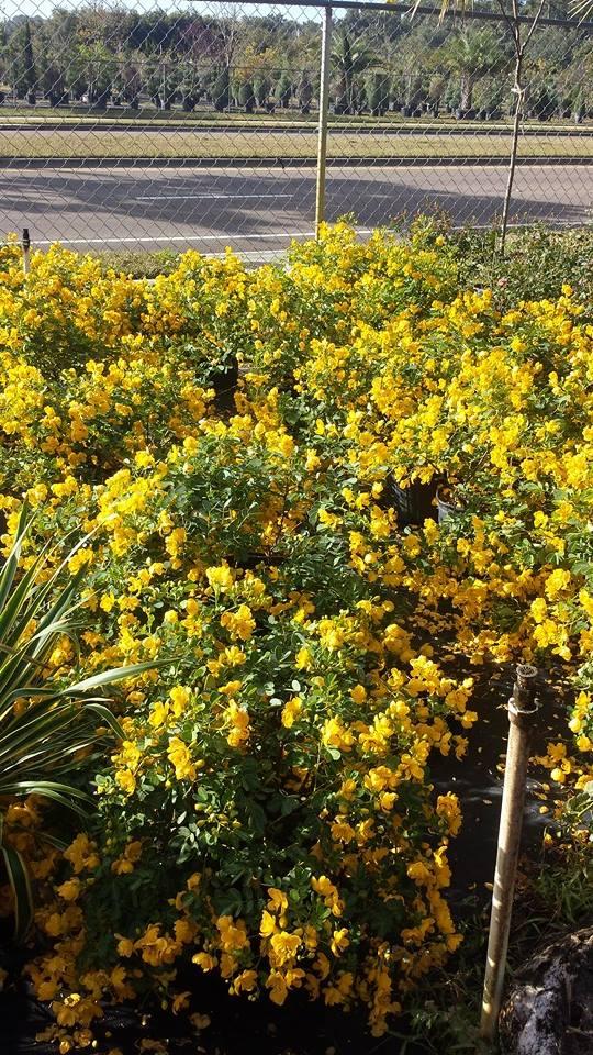 Garden Plants Gainesville Fl