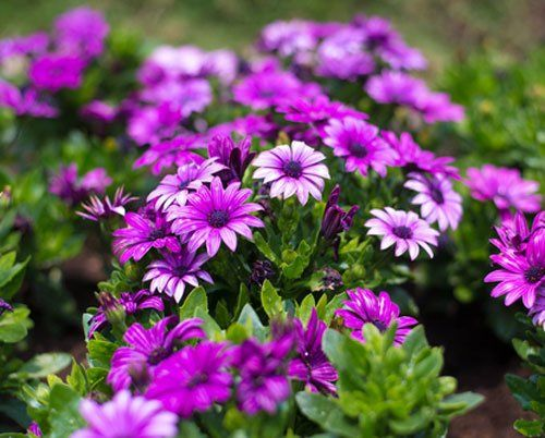 Piante con i fiori viola