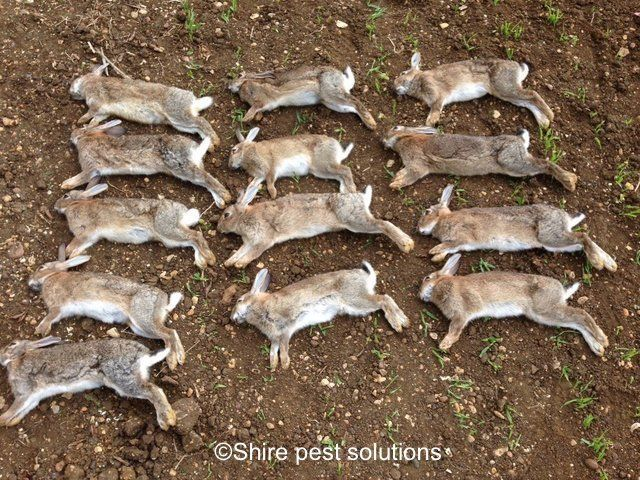 Rabbit Ferreting in Didcot, Abingdon,Wantage