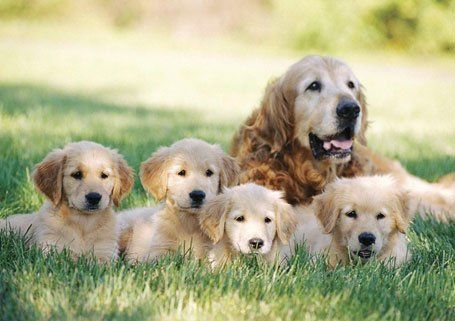 a dog and its puppies