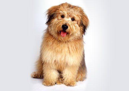 furry puppy