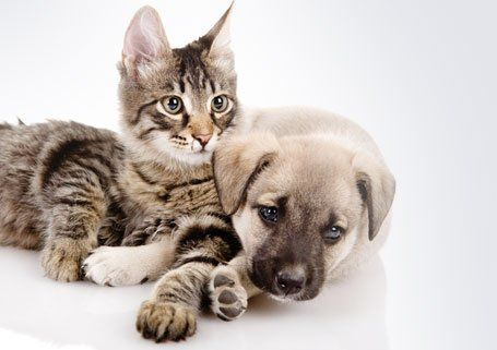 a puppy and kitten