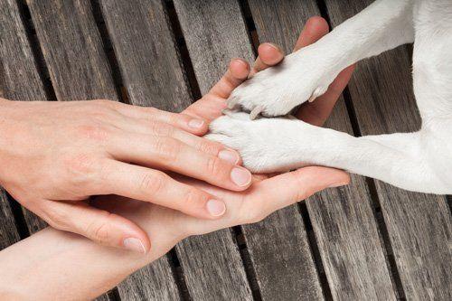 Mani di una donna che tengono le zampe di un piccolo cane