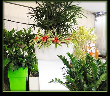 Vendita piante e fiori aci catena catania vivai patan for Vendita piante e fiori