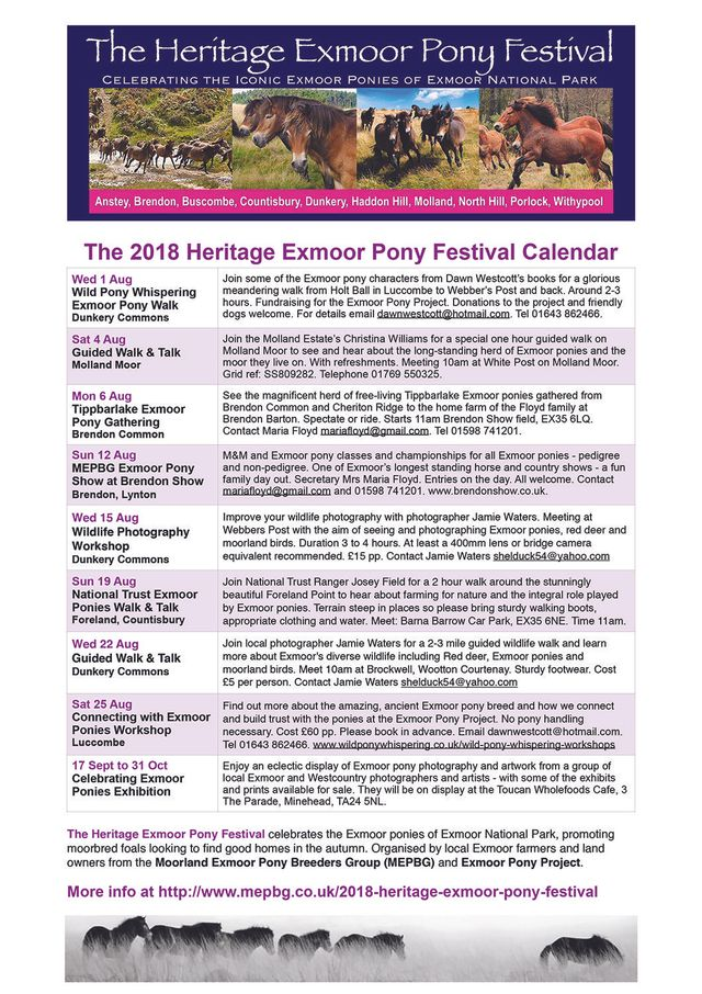 Coming up - Heritage Exmoor Pony Festival