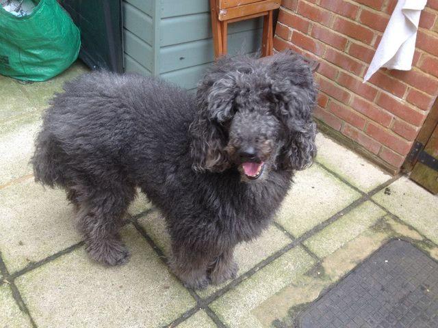 Dog Grooming Prices Southampton Plush Puppies