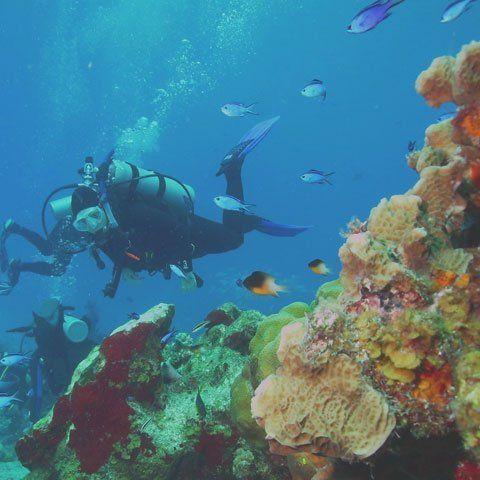 Babieca Dive Center - Home Page