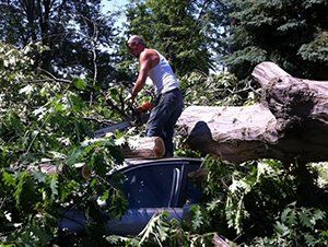 Emergency Tree Service Mentor, OH