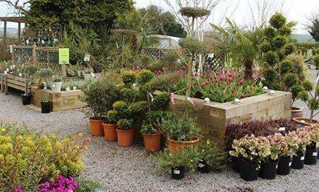 A garden club