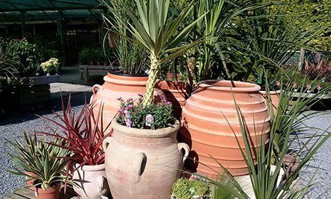 Seasonal bedding plants