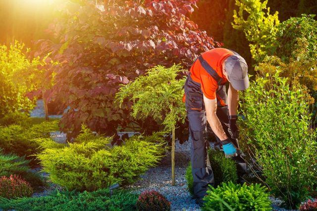 Una persona che cammina su un giardino spruzzando acqua con un attrezzo per giardinaggio