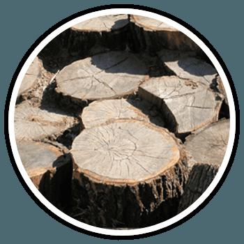 unsightly stumps