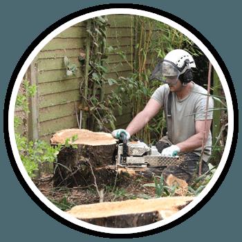 Efficient stump grinding service