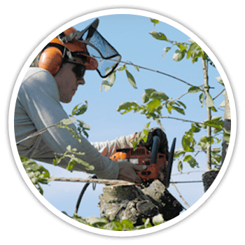Expert tree care