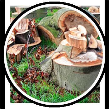 tree husbandry