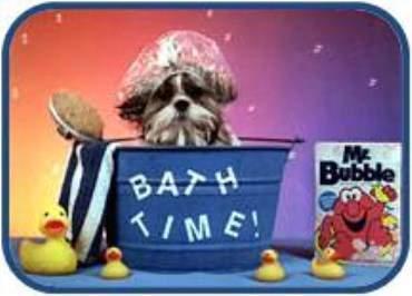 Shih Tzu in bath tub