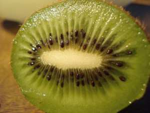 kiwi fruit for Shih Tzu