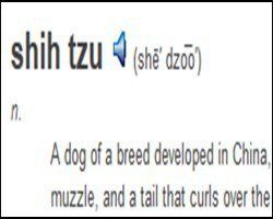 pronunciation of Shih Tzu word