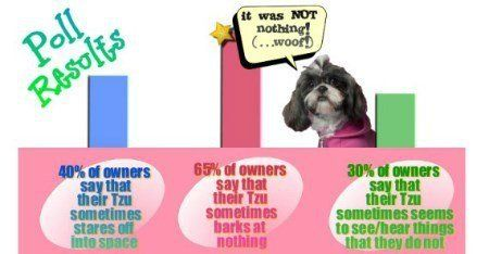 Shih Tzu Personality | Disposition, Characters and Traits