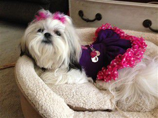 Clothing For Shih Tzu Puppies And Dogs