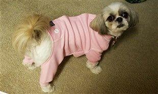 shih-tzu-pajamas