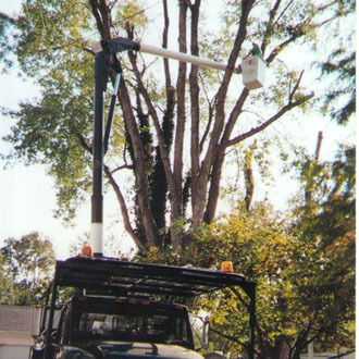 Tree maintenance with a truck in Hamilton