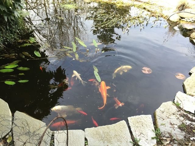 Pond Maintenance Sevenoaks