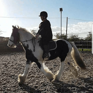 Riding lessons tailored to your needs