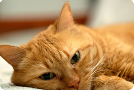 Court Cases For Cats To Be Service Animals