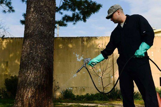 man-spraying-insecticide
