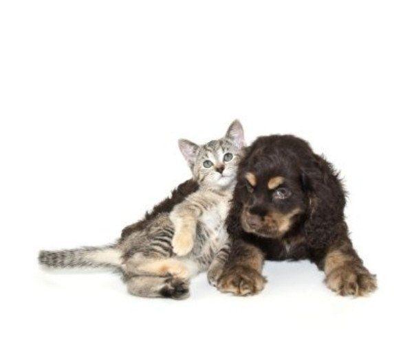 visite specialistiche per cani e gatti