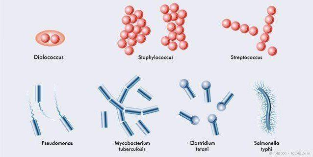 Wirksame Beseitigung krankmachender Mund-Bakterien