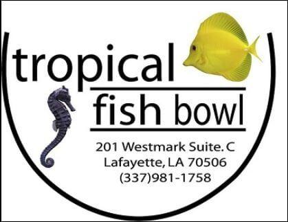 Fish for Sale - Lafayette, LA - Tropical Fish Bowl