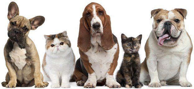 pronto soccorso notturno per animali; pronto soccorso per animali;radiologia per animali