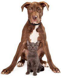 prestazioni veterinario, chirurgia animali, laboratorio veterinario