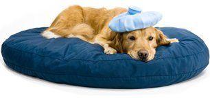 visite specialistiche, medici veterinari,  laboratorio analisi animali