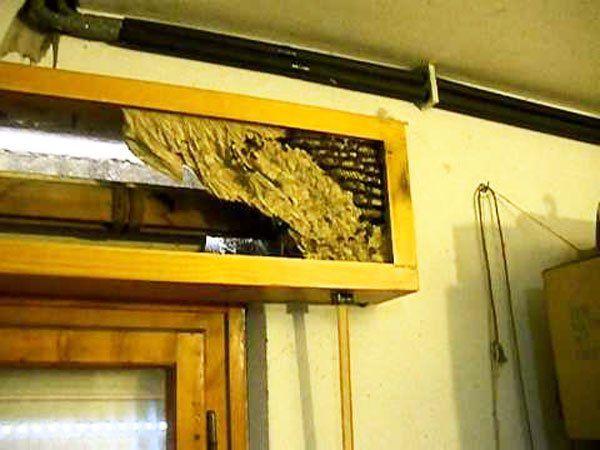 nido di vespe nel cassonetto di una tapparella