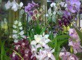 vendita fiori, vendita piante, fiori per matrimonio